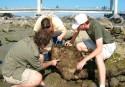 Career In Environmental Science