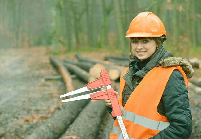 career in forestry